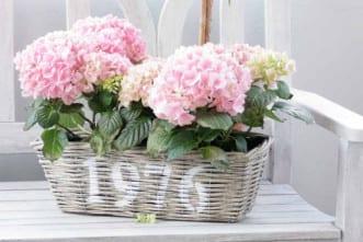 flores_primavera