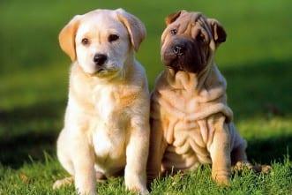 desfile solidario perros web dest